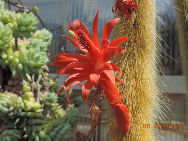 Cacti and Sukkulent in Köln, every day new flowers in the greenhouse Part 198 Bild_989