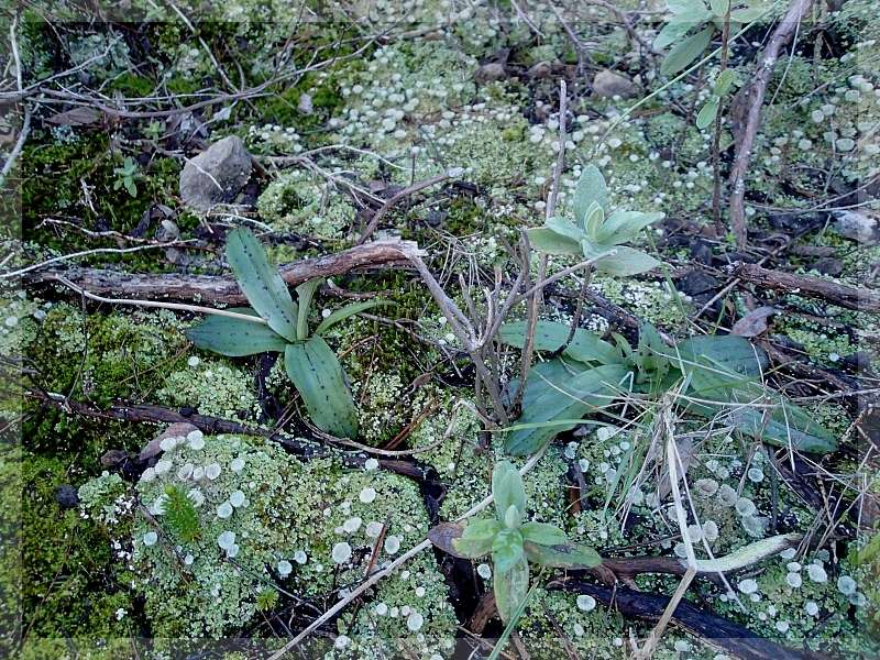 Identification de rosettes 2014-010