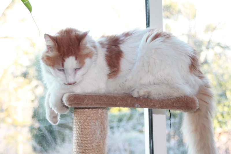 EZZIO - roux et blanc poils longs - 01/2008 - Page 2 Img_1213