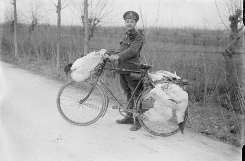 342 photos inédites de la Grande guerre !!! Oie10