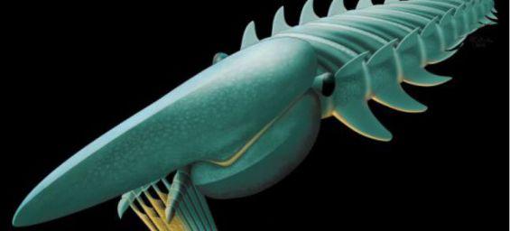 Maroc : Découverte d'un fossile d'un monstre marin inconnu Monstr10