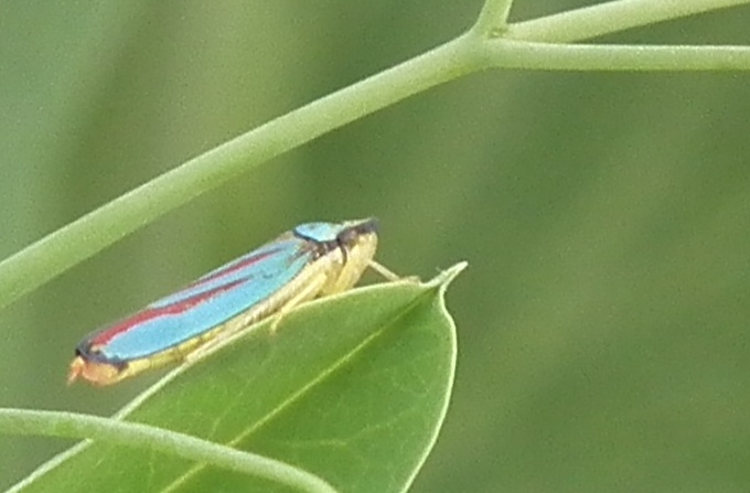 mini insecte id Dscf1412