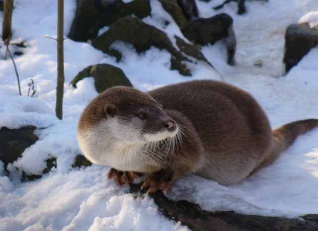 Animaux Otter_10
