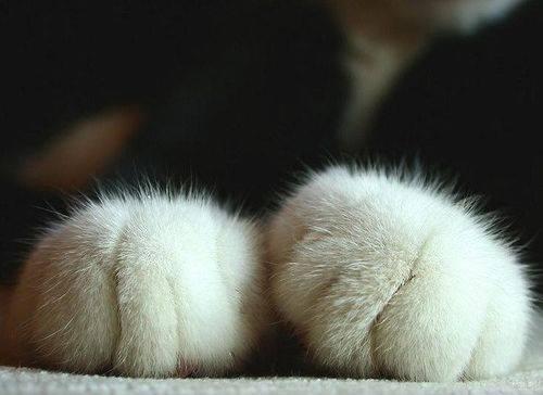 Miau... - Seite 3 10429810