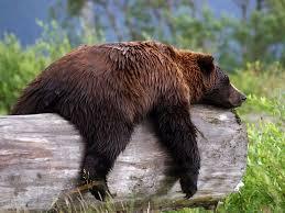 Jeu de la bombe pour Grizzly(et que pour Grizzly) Grisly10