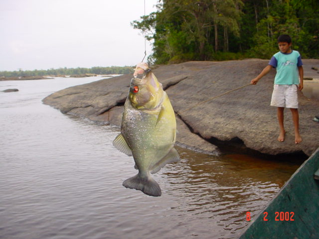 River Monsters ! Dsc00010