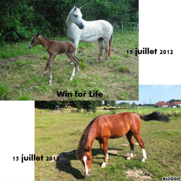 Anniversaires de nos moitiés équines = OPALE : 22 mars 2006 - AURORE : 27 mars 1988 - Page 2 Bloggi11