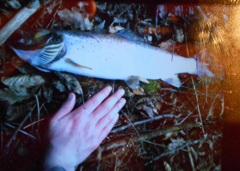 Grosse mortalité de truite en ruisseau !!! Dscn6710