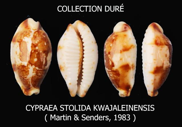 Bistolida stolida kwajaleinensis - (Martin & Senders, 1983)  Panora63
