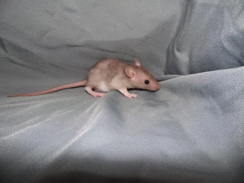 de retour chez les ratouphiles , voila mes princesses  10891911