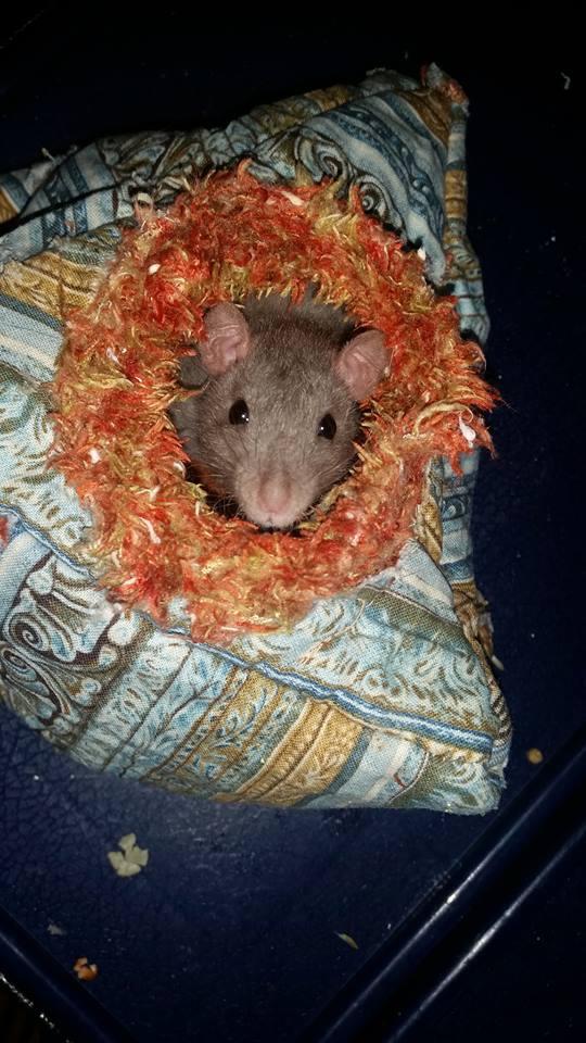 de retour chez les ratouphiles , voila mes princesses  10896910
