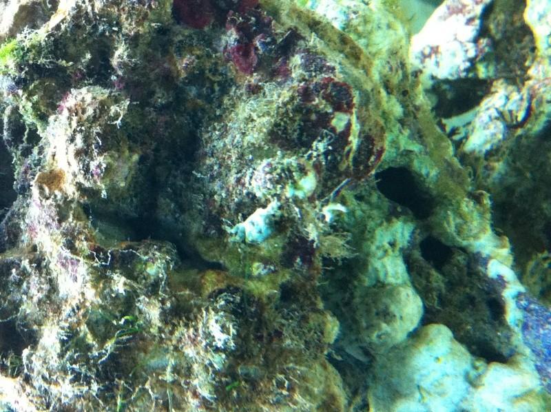 Un crabe inconnu  Img_0411