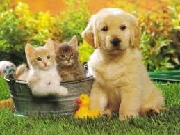 amis des bêtes, cliquez pour les animaux ! clicanimaux…  - Page 4 Images10