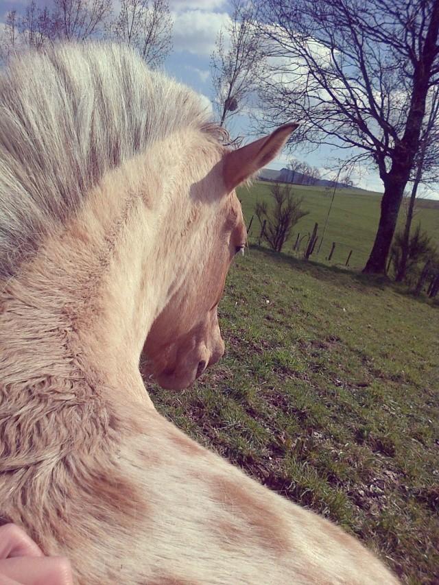CONCOURS PHOTO : Les chevaux paresseux... Img-2011