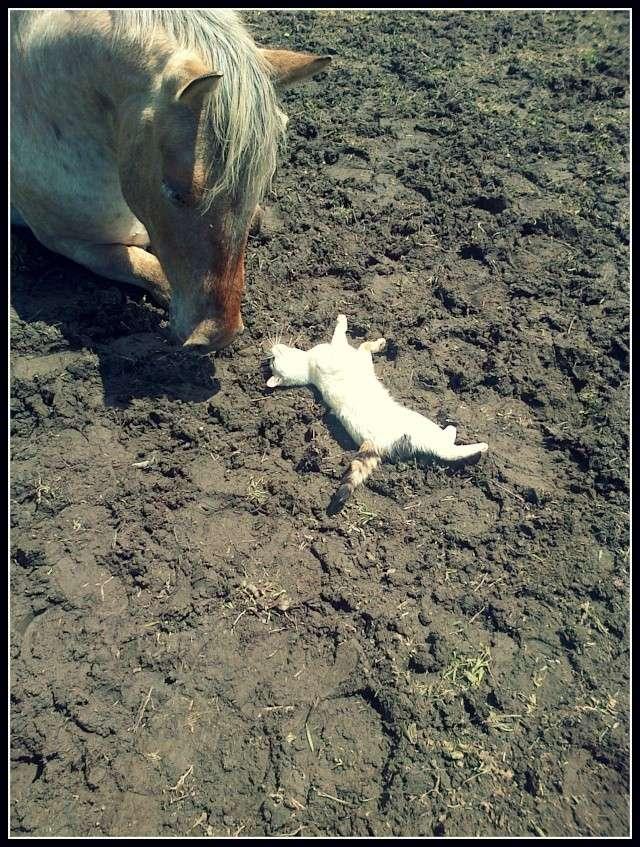 CONCOURS PHOTO : Les chevaux paresseux... Img-2012