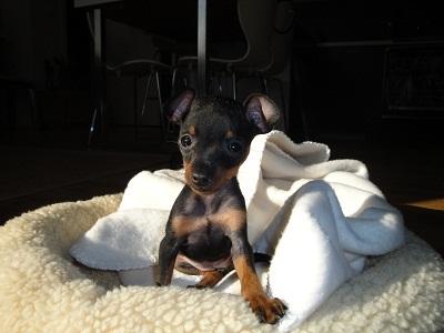 hello! c'est moi Lola  Dsc00514