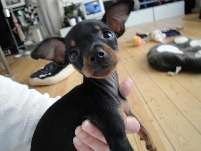 hello! c'est moi Lola  Dsc00516