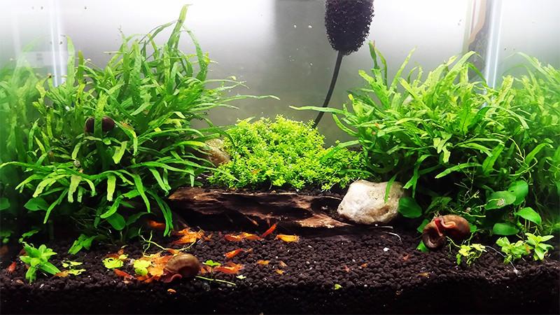 Mur végétal avec aquarium de 320L ---> Paludarium - Page 9 20150110