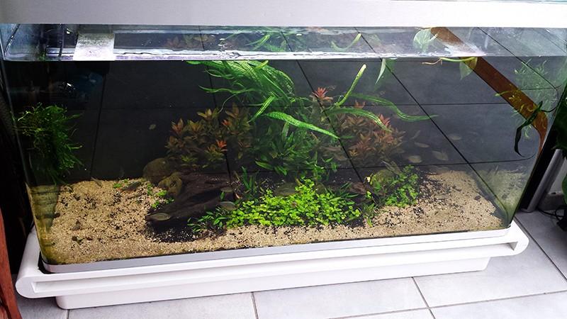 Mur végétal avec aquarium de 320L ---> Paludarium - Page 9 20150311