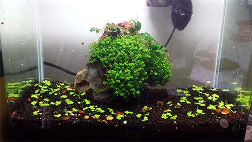Mur végétal avec aquarium de 320L ---> Paludarium - Page 9 20150312