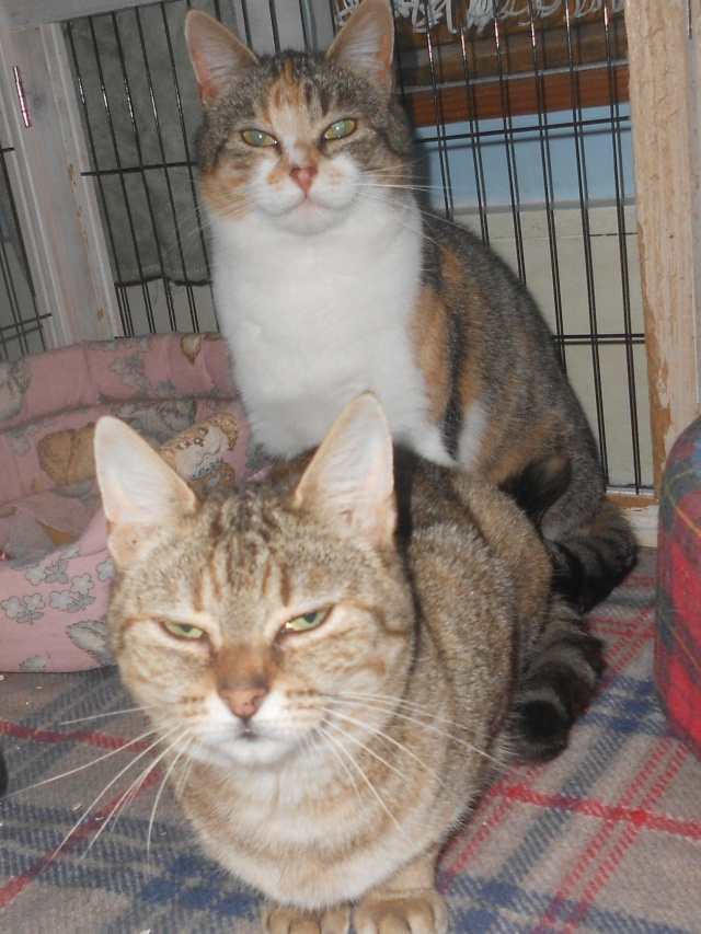 Ava tricolore et Amber tricolore et blanche - nées en 2011 e Rscn3614