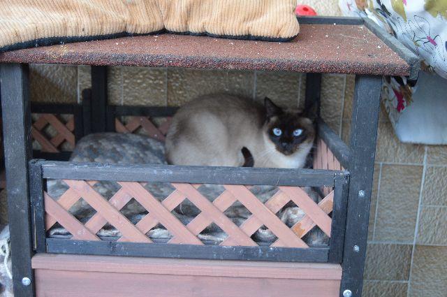 Canis Siamesita   08-02-17