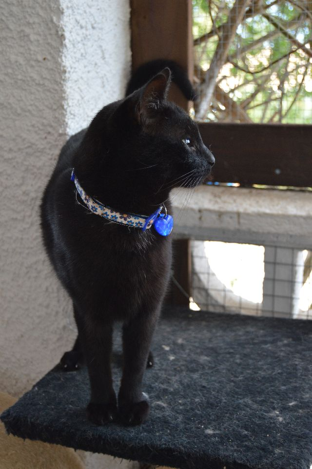 Canis - Sam (gedeeltelijke adoptie) 08-02-37