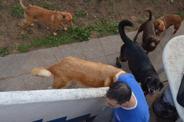 Canis - Golfo 08-02-60