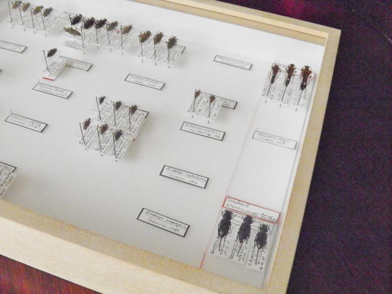 Boites entomologiques P1070011