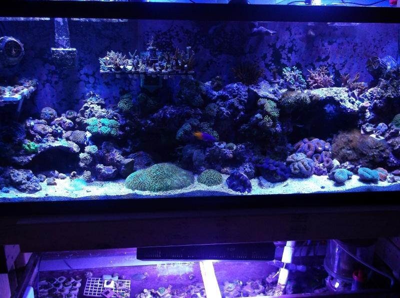 55 Nano Reef Rebuild Dscf1011