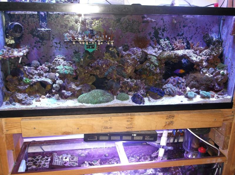 55 Nano Reef Rebuild Dscf1012