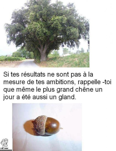 [Humour] Blagues, images, videos ... - Page 7 610