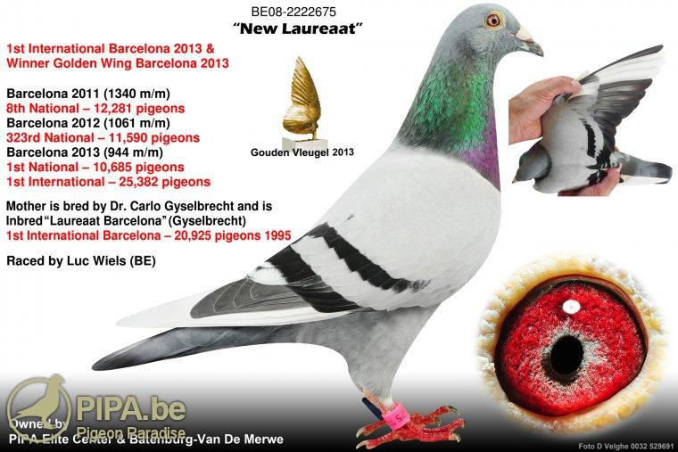 Le 1er international Barcelone 2013 'New Laureaat' dans les pigeonniers Batenburg/PEC, PIPA 1int10