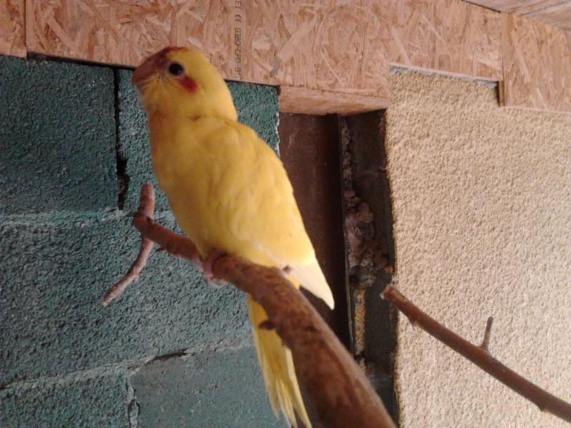 Sorties du nid... Photo016