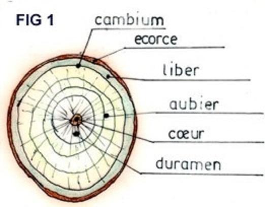 Naturel comme la Vannerie sauvage  Fig01c10