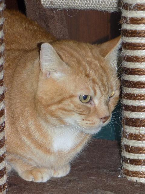 Garfield, Mâle européen (01/01/2007) - FIV+ Dscn5412