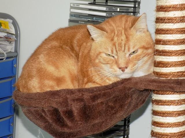 Garfield, Mâle européen (01/01/2007) - FIV+ Dscn5510