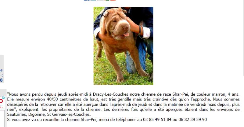 chienne perdue dans le 72 / Saone et Loire Creuso10