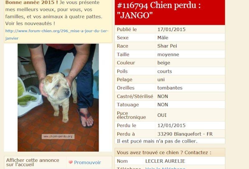JANGO  perdu dans le 33 / Aquitaine Jango10