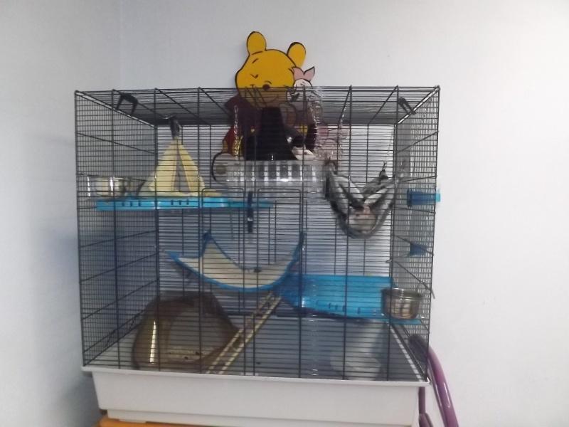 [RECHERCHE] Cage pour 3 rates [49] Dscf9110