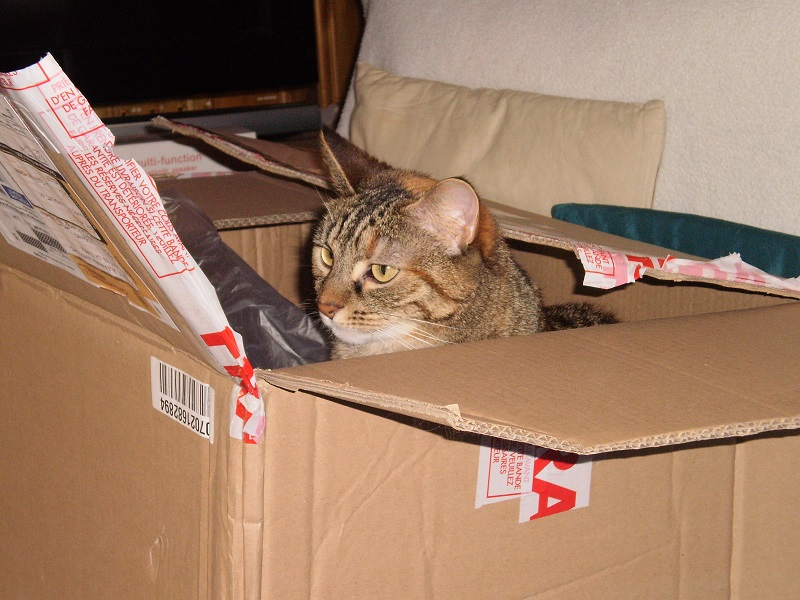 Paniers Handi'Cats !! - Page 2 Test_c10