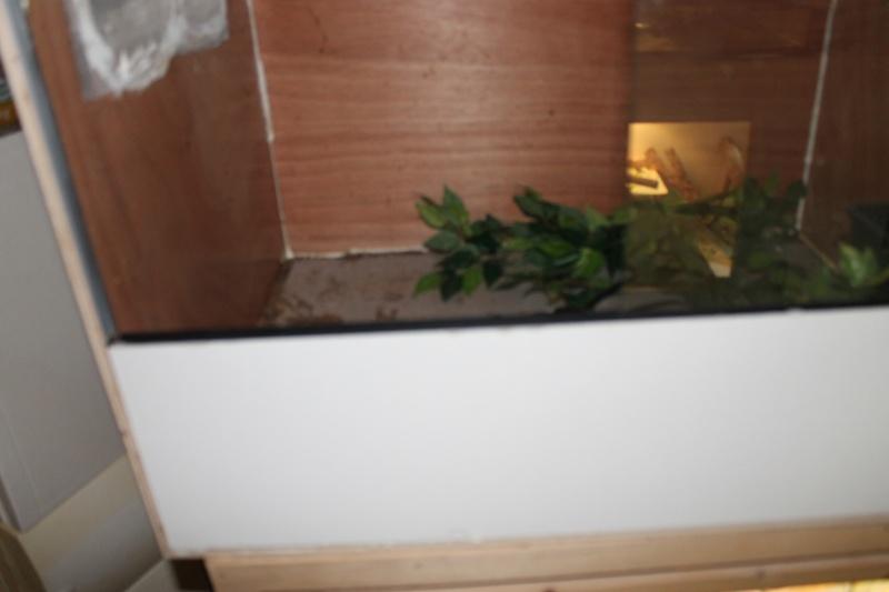 Nature bois terrarium pogona + ventilation Img_1718
