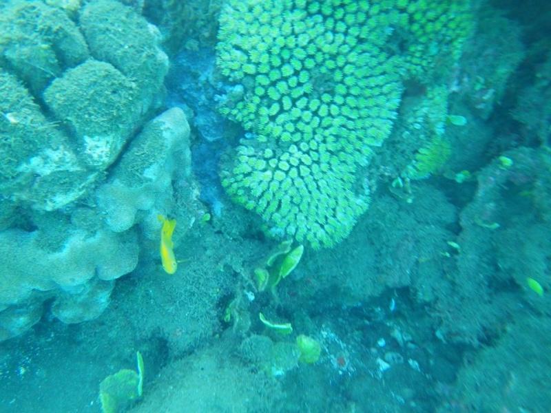 Bonjour de Mayotte Img_0311