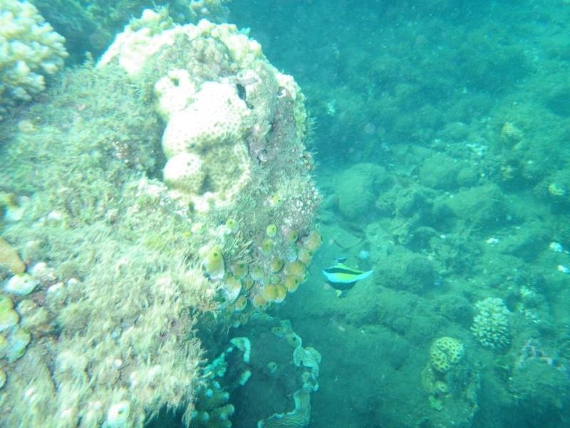 Bonjour de Mayotte Img_0312