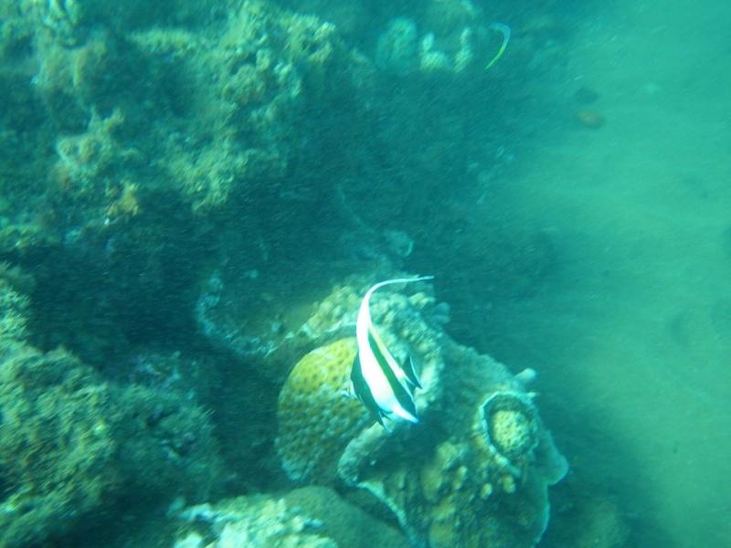 Bonjour de Mayotte Img_0313