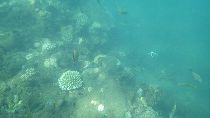 Bonjour de Mayotte Img_0314