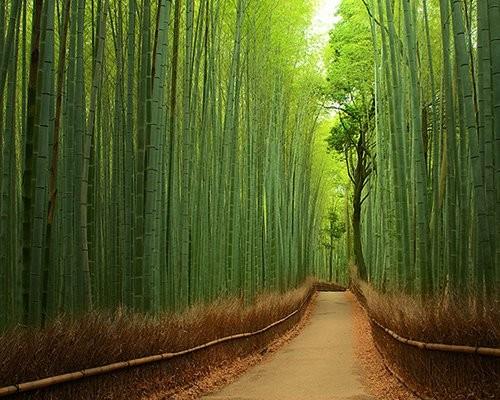 Rêver avec le réel, paysages - Page 3 Bambou10