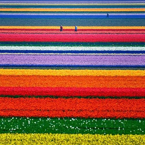 Rêver avec le réel, paysages - Page 2 Tulipe10