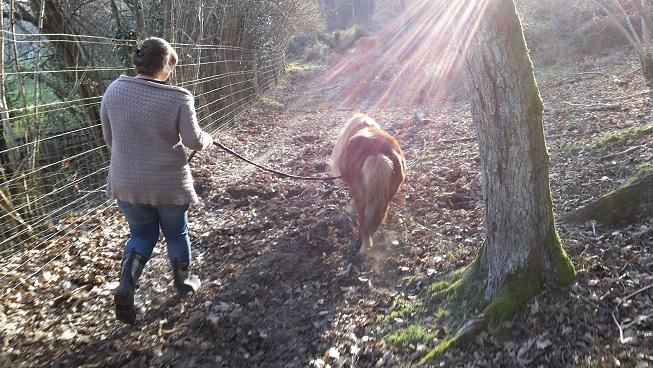 Balade dans les bois 20150323