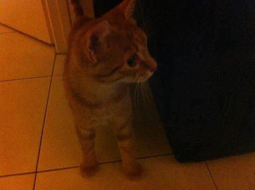 SUNNY retour d'adoption... Img_4910